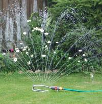 Sprinkler watering the garden