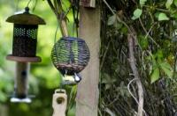 Bird feeders in garden