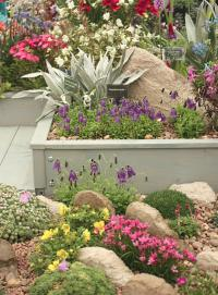Container grown miniature rock gardens