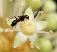 How to Get Rid of Ants in your Garden