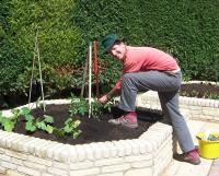 Brick vegetable beds