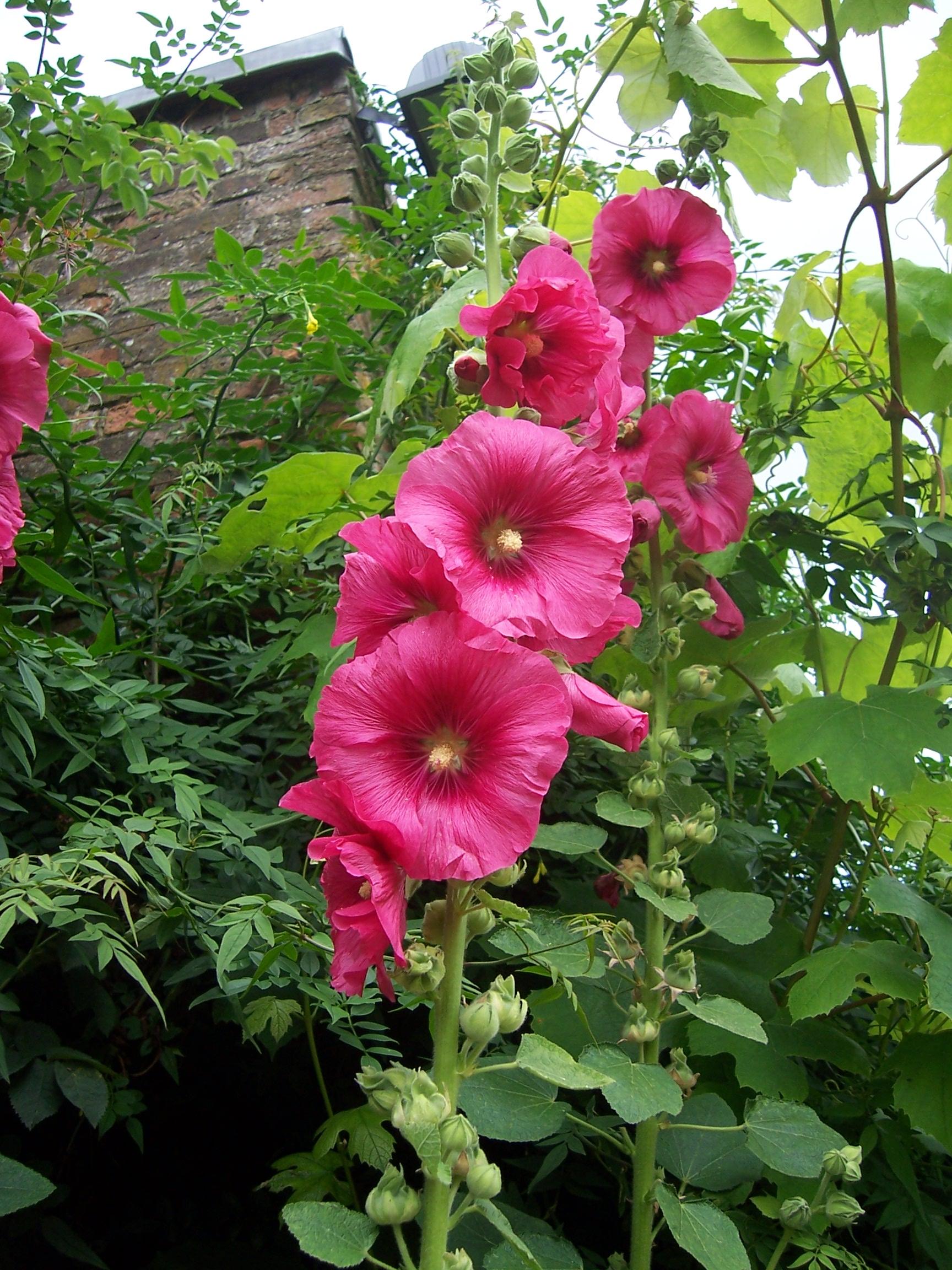 Garden Bush: Garden And Plant Photos