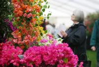 Spring Begins in Time for RHS Cardiff Show