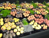 Potatoes display stand at RHS Chelsea 2015