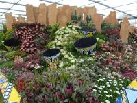 The South African Kirstenbosh display at the RHS Chelsea Flower Show 2019