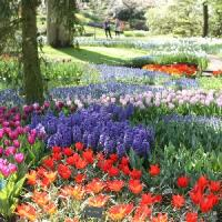Episode 14: Keukenhof Gardens & Gardening Jobs for May